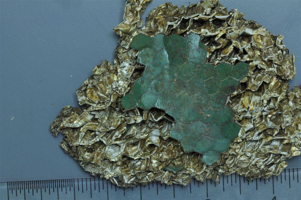 Aileron Honeycomb side-1