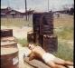 jerry-sunbathing-by-hooch